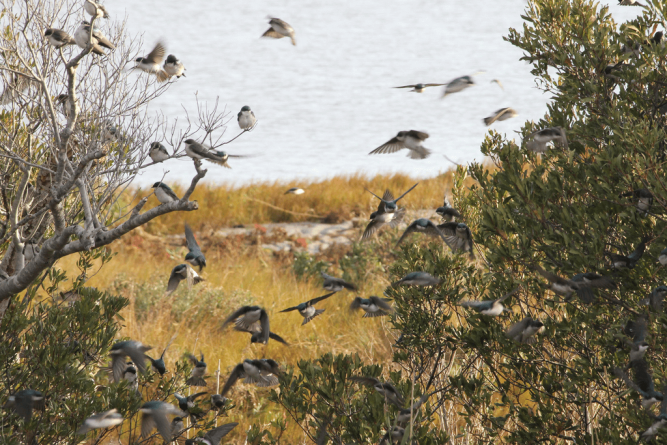 Fans flock to annual Birding Weekend