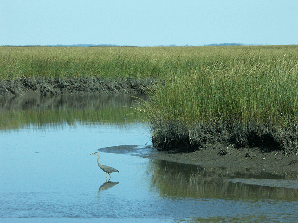 Assateague Island Cruises Ocean City Md