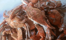 5 tips for crabbing with a hand line