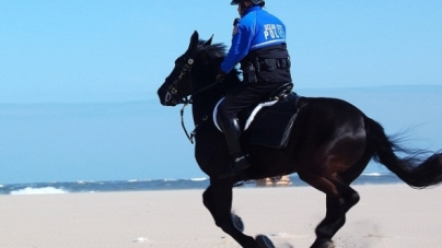 OCPD retires horse,'Goodnight'