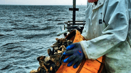 Oyster recovery effort gets boost from event at Fager's