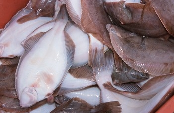 Flounder hearings prompt suggestions