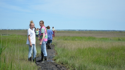 A Trek through Chincoteague's Taxa