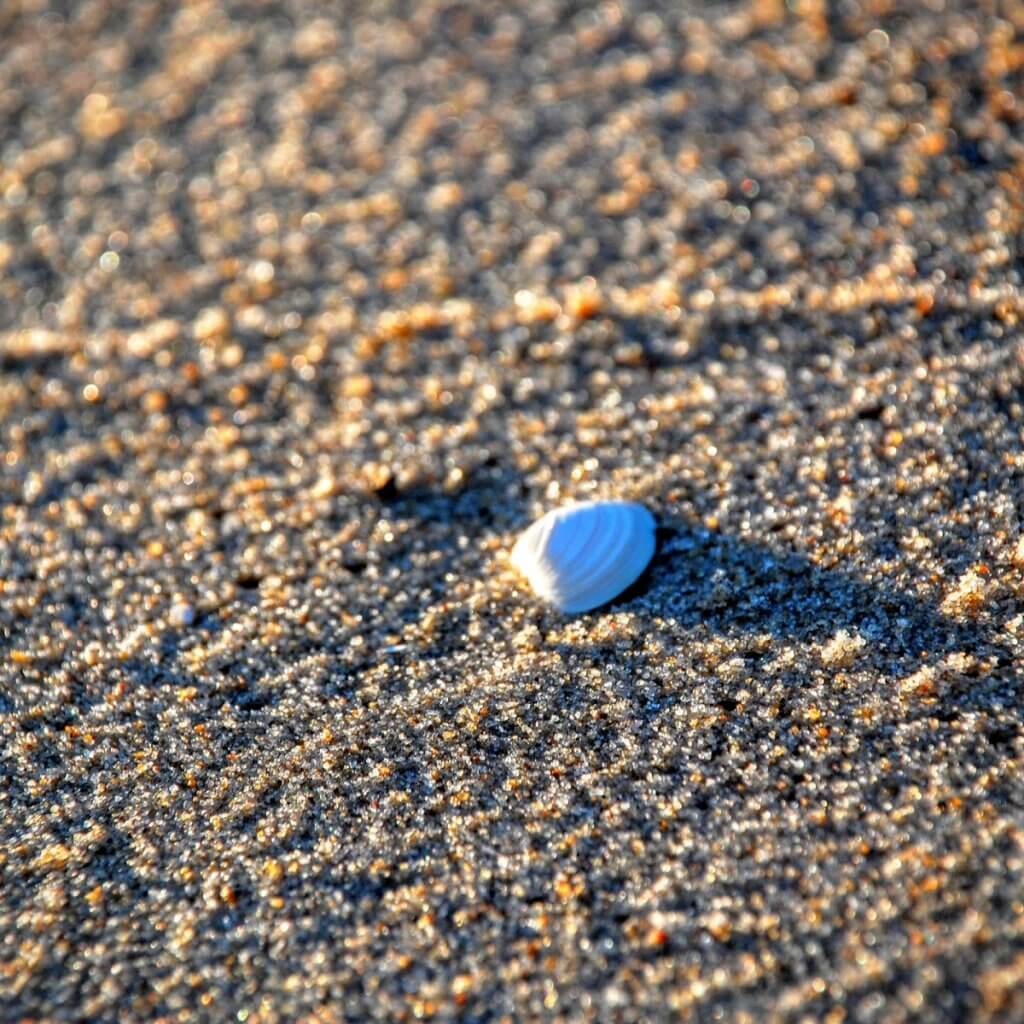 sea shell ocean city beach