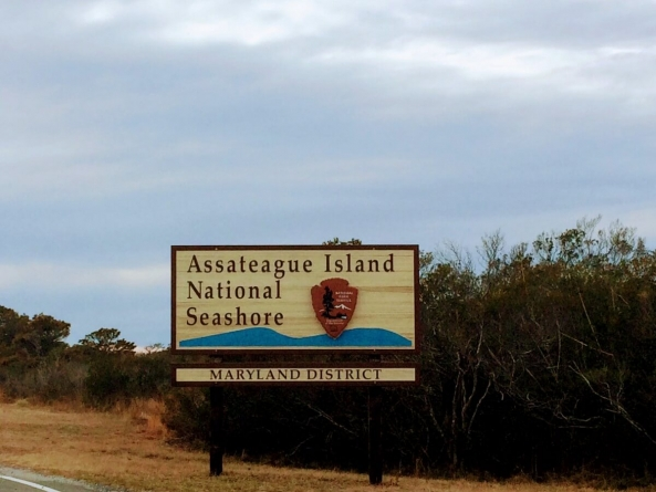 An off-season afternoon on Assateague Island