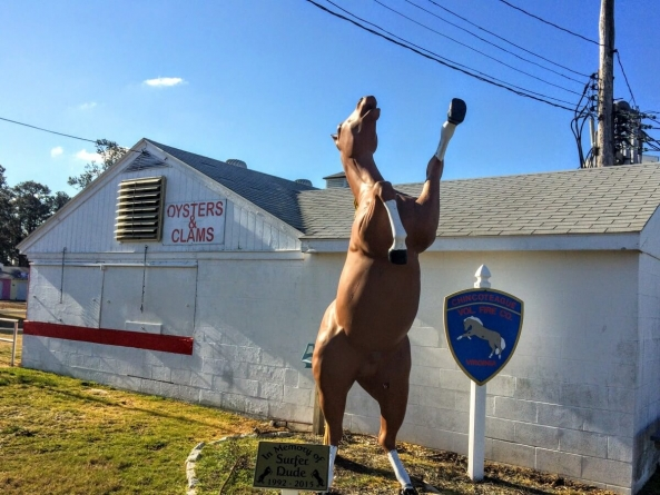 Chincoteague: The other horse island