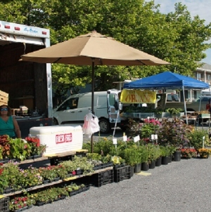 Eat green at the Ocean City Farmer's Market