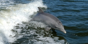 Creature Feature: Dolphin watching on the Shore