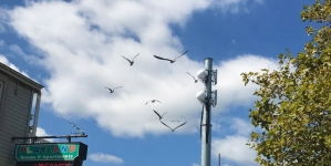 Garbagemen of the Beach: Ocean City Seagulls