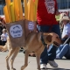 Too doggone cute: 15 photos from the Howl-O-Ween Pet Parade